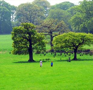 Shiplake Fields